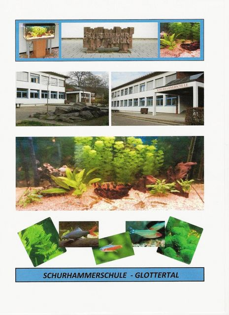Schulhammerschule3.jpg